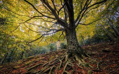 Forêts de l'Alt Empordà pour profiter des couleurs de l'automne